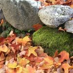 Moss rocks and leaves on Orcas Island