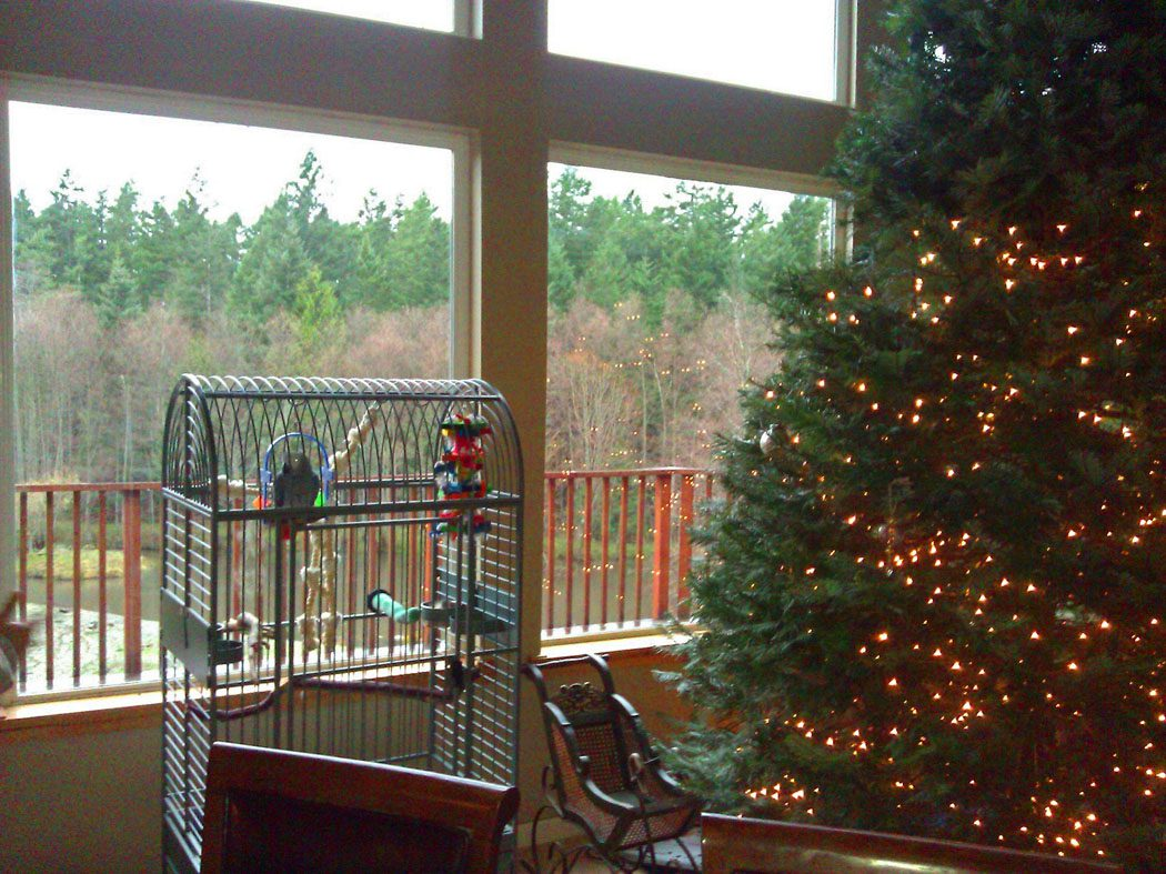 Charlie the Parrot in his new home on Orcas Island